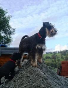 dog breeding environment