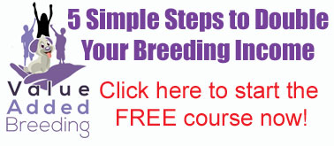 dog breeding business guide